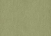 3240 willow.jpg